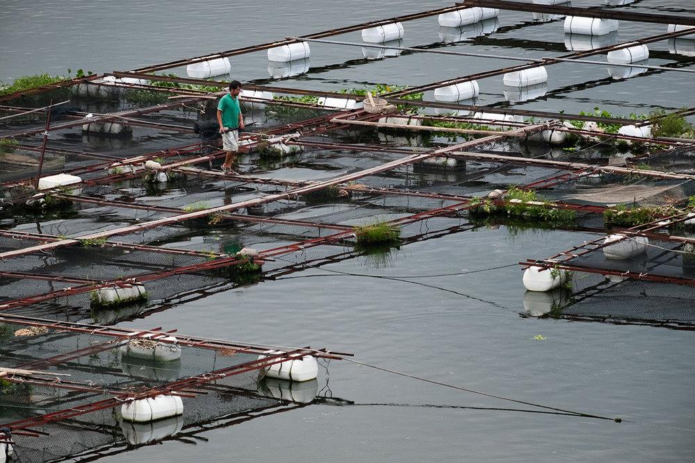 18-08-14---Récolte-sur-l'eau-(Xiongjian,-Chine).jpg