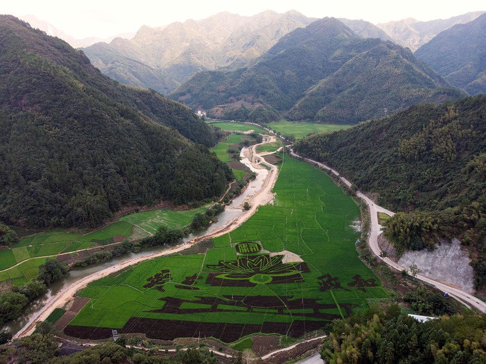 À Waitunxiang, je fais voler mon drone pour prendre une photo de la vallée lorsque j'aperçois avec surprise ces motifs dans les plantations plus bas.