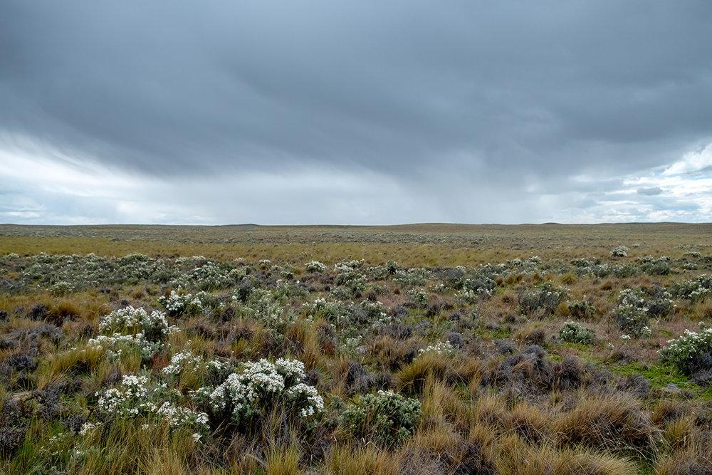 L'horizon infini de la pampa. Avec de la pluie qui approche.