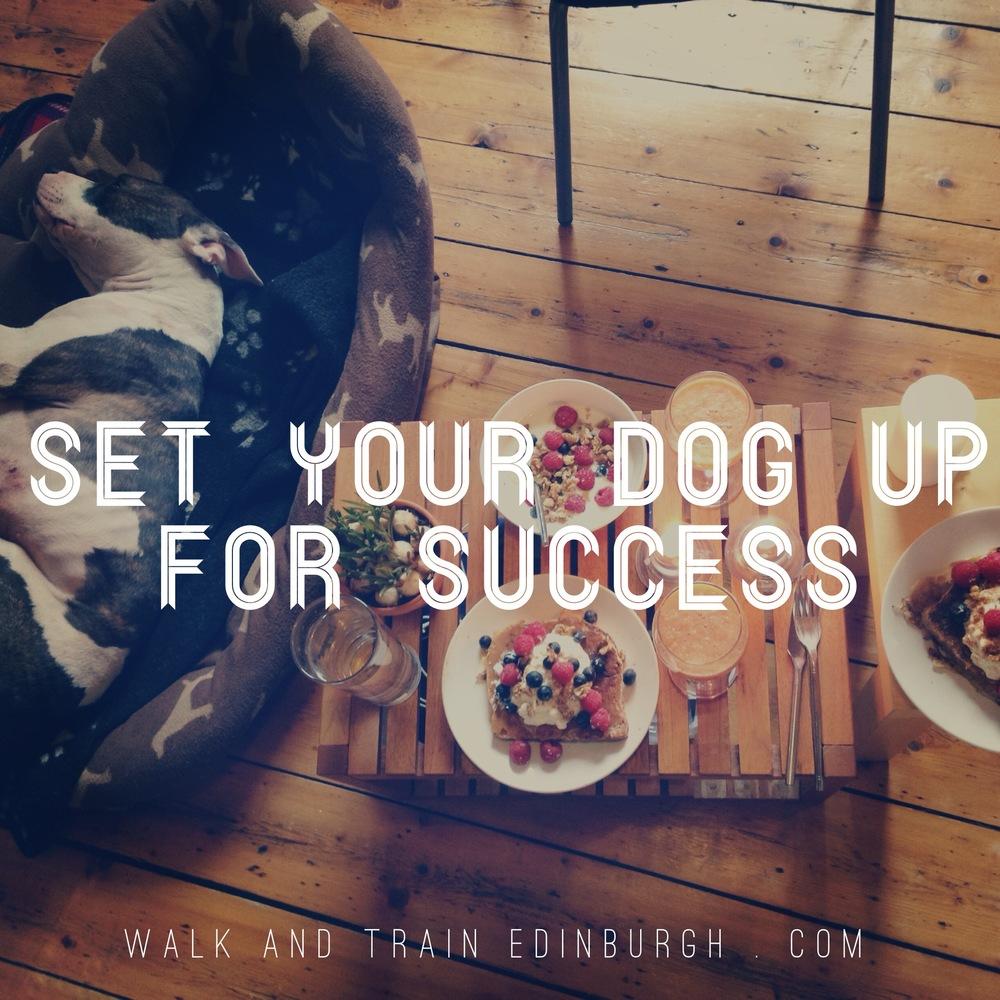 Set Your Dog Up For Success Walk Train Edinburgh Dog Walking