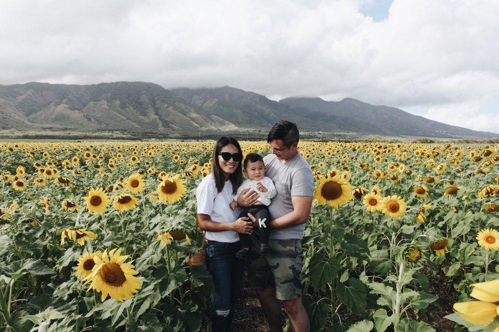 Sunflowers Maui
