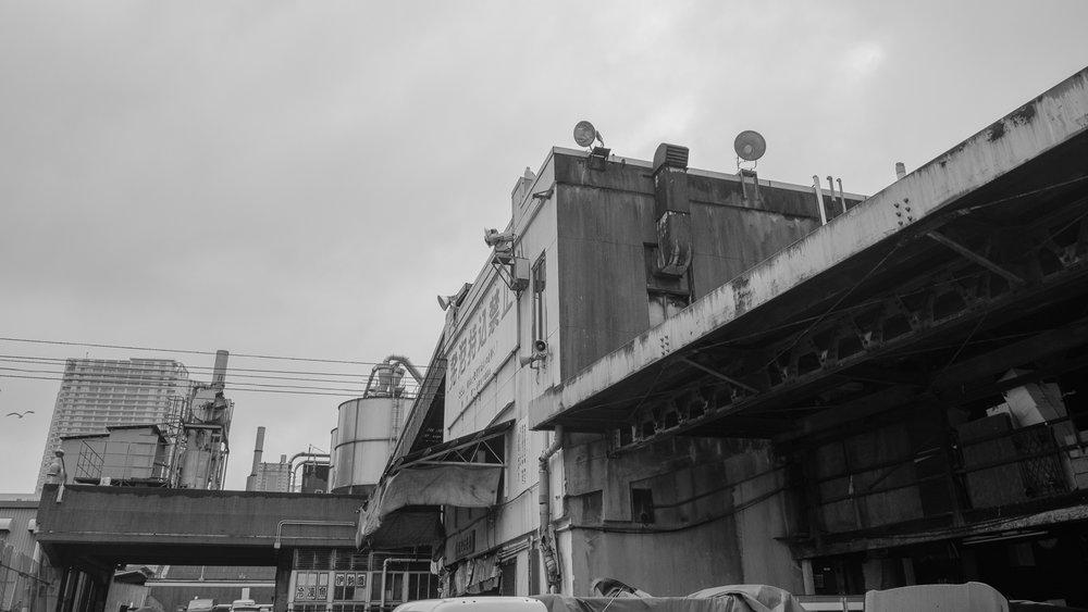 Brad_Merrett_Tsukiji-2.jpg