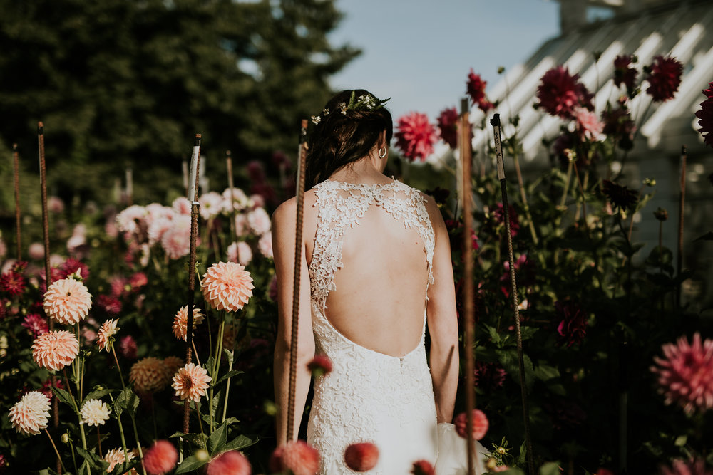 Bride standing among dahlias near greenhouse in Victoria BC wedding