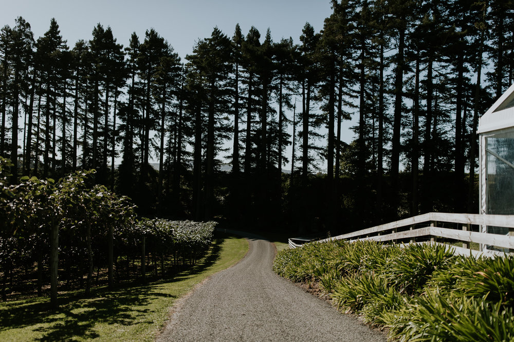 Road lined by trees at elegant farm wedding in New Zealand