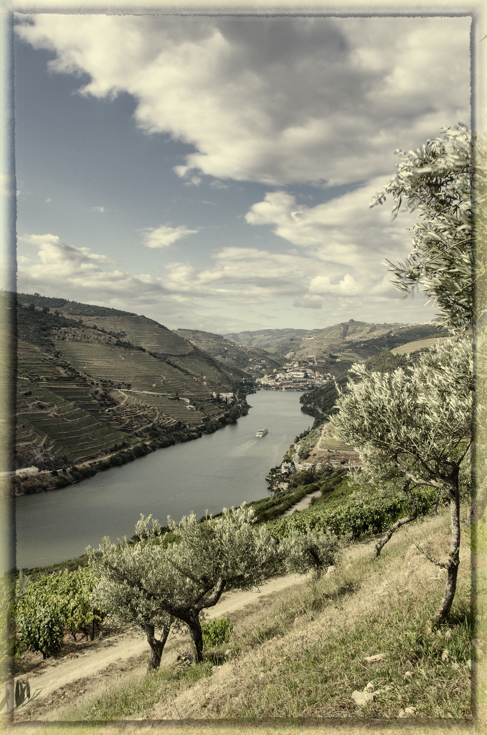 Vineyards above the Douro River