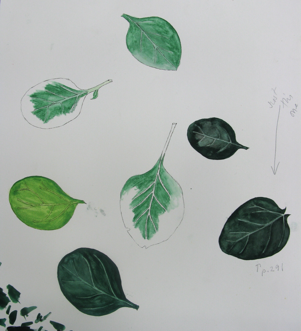 Mollie's Spinach Leaf Illustration