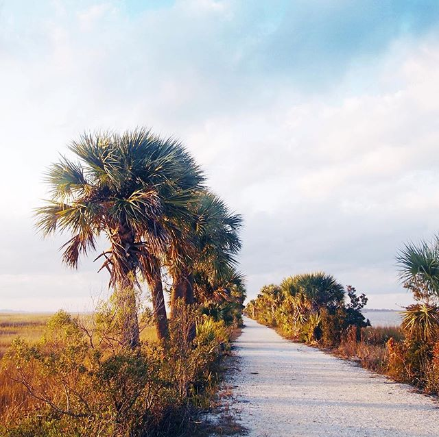 Palmetto inspiration. Can't wait to start on a new marshscape painting this weekend! #nothingisordinary
