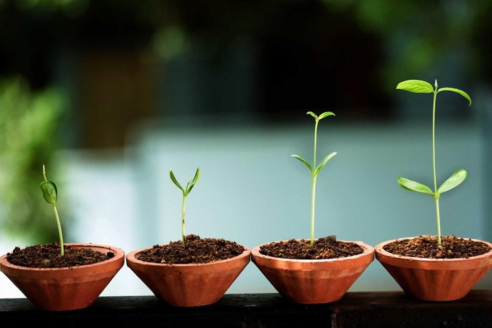 Dit is de Cees plant