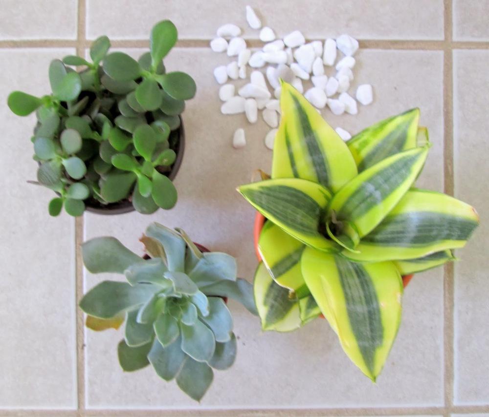succulents7.jpg
