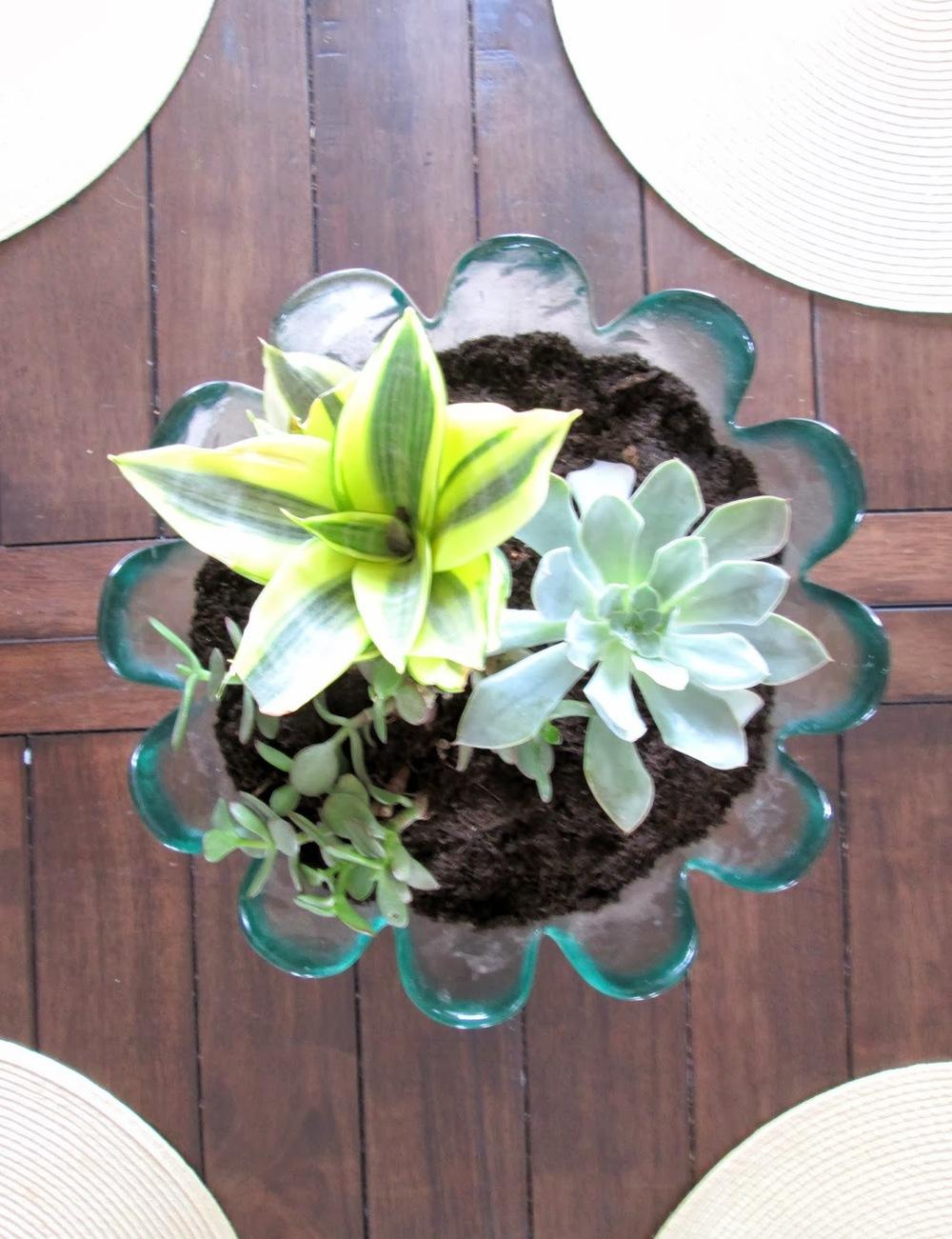 succulents3.jpg