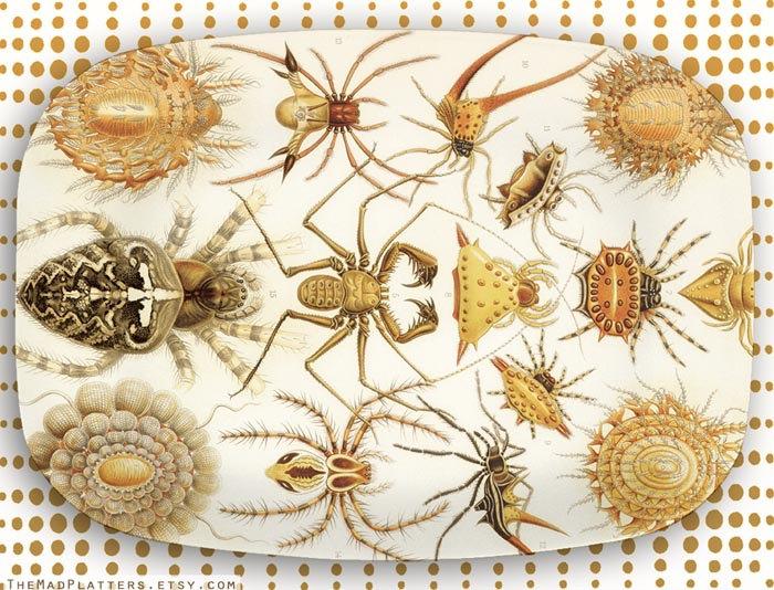 bugs 1.jpg