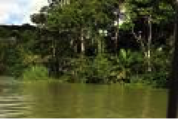 Jungle River