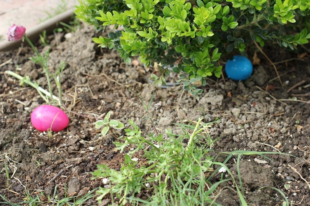 egging5.jpeg