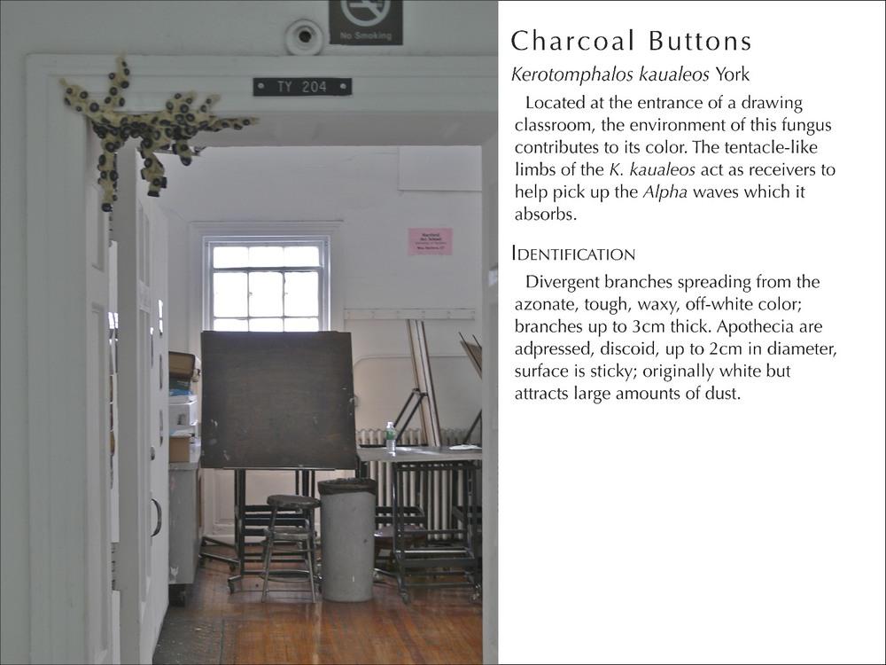 CharcoalButtons_WText.jpg