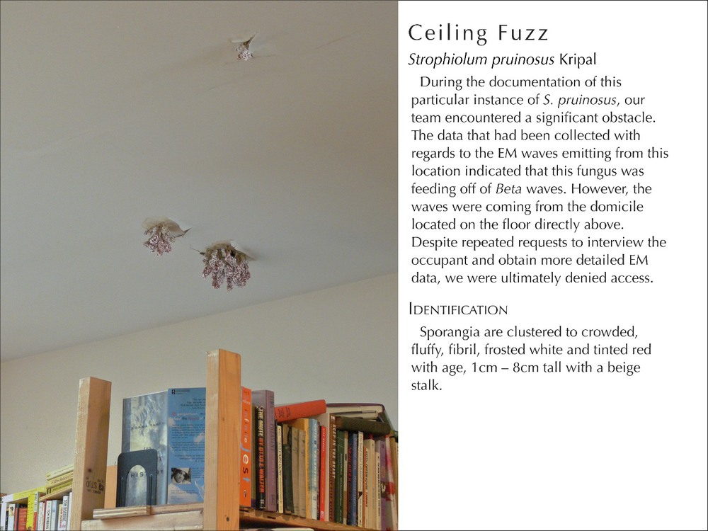 CeilingFuzz2_WText.jpg