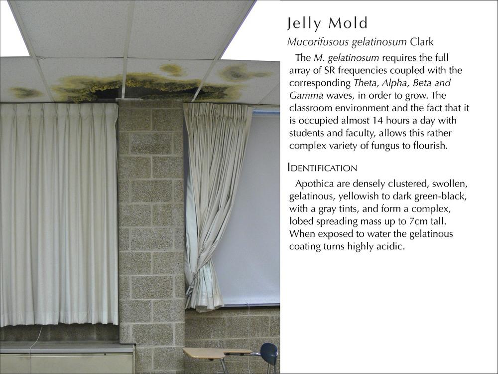JellyMold_WText.jpg