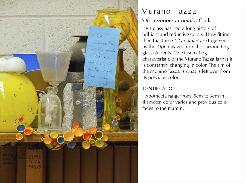 MuranoTazza2_WText.jpg