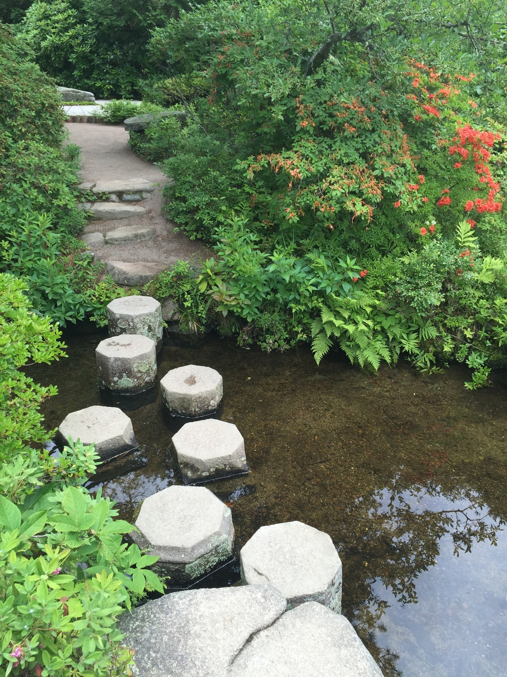 Stepping stones in the Azalea Garden.