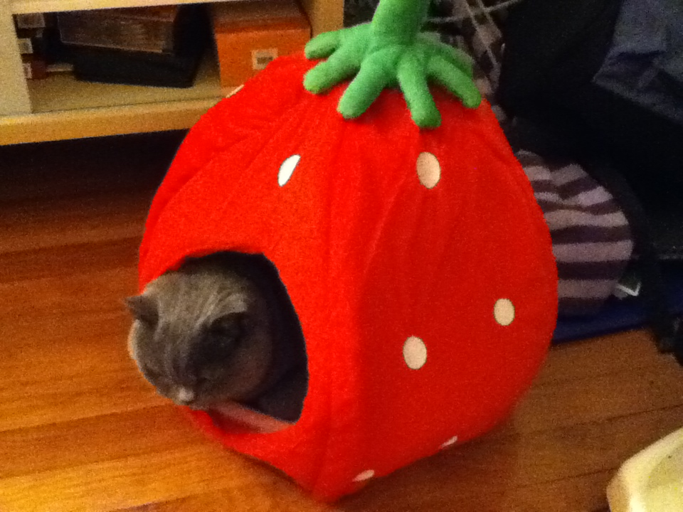 Gigi loves his strawberry house