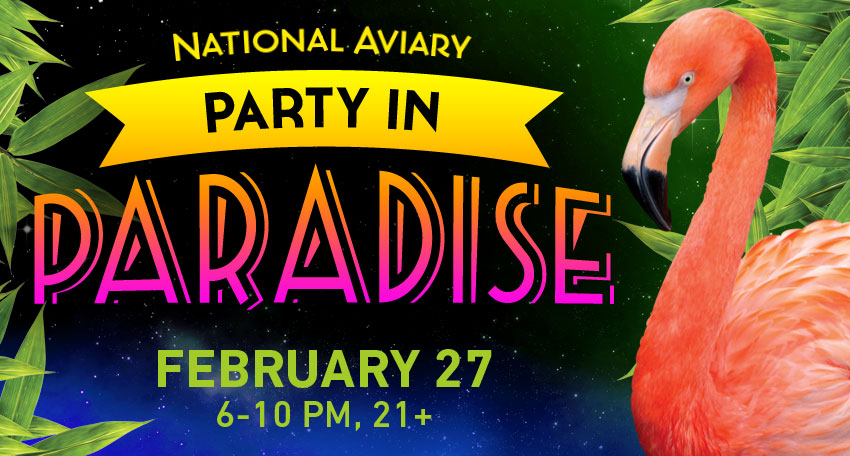 http://www.showclix.com/event/PartyinParadise