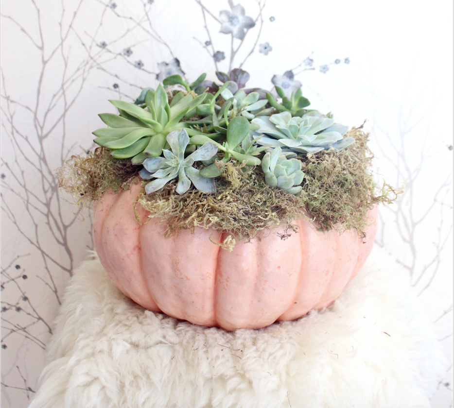 succulent cinderella pumpkin - pic from zoe with love blog