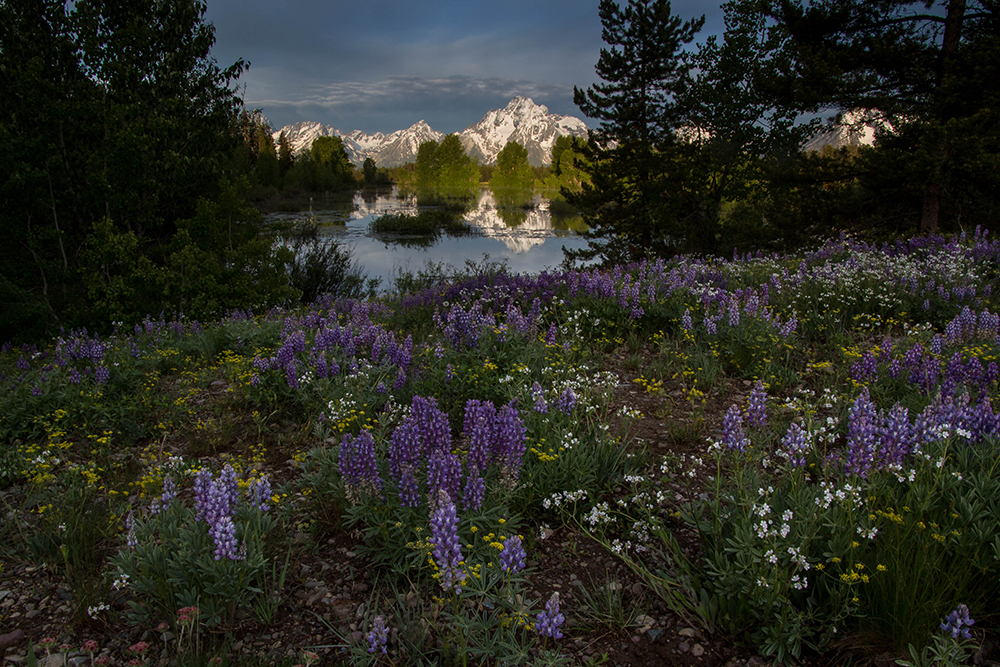 Grand Tetons from Pilgrim Creek