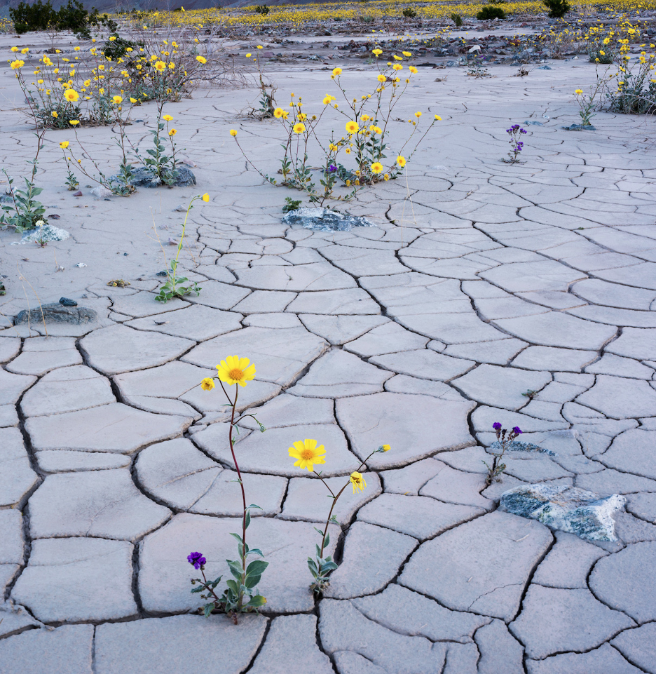 Photo: Death Valley Bloom, courtesy of National Geographic