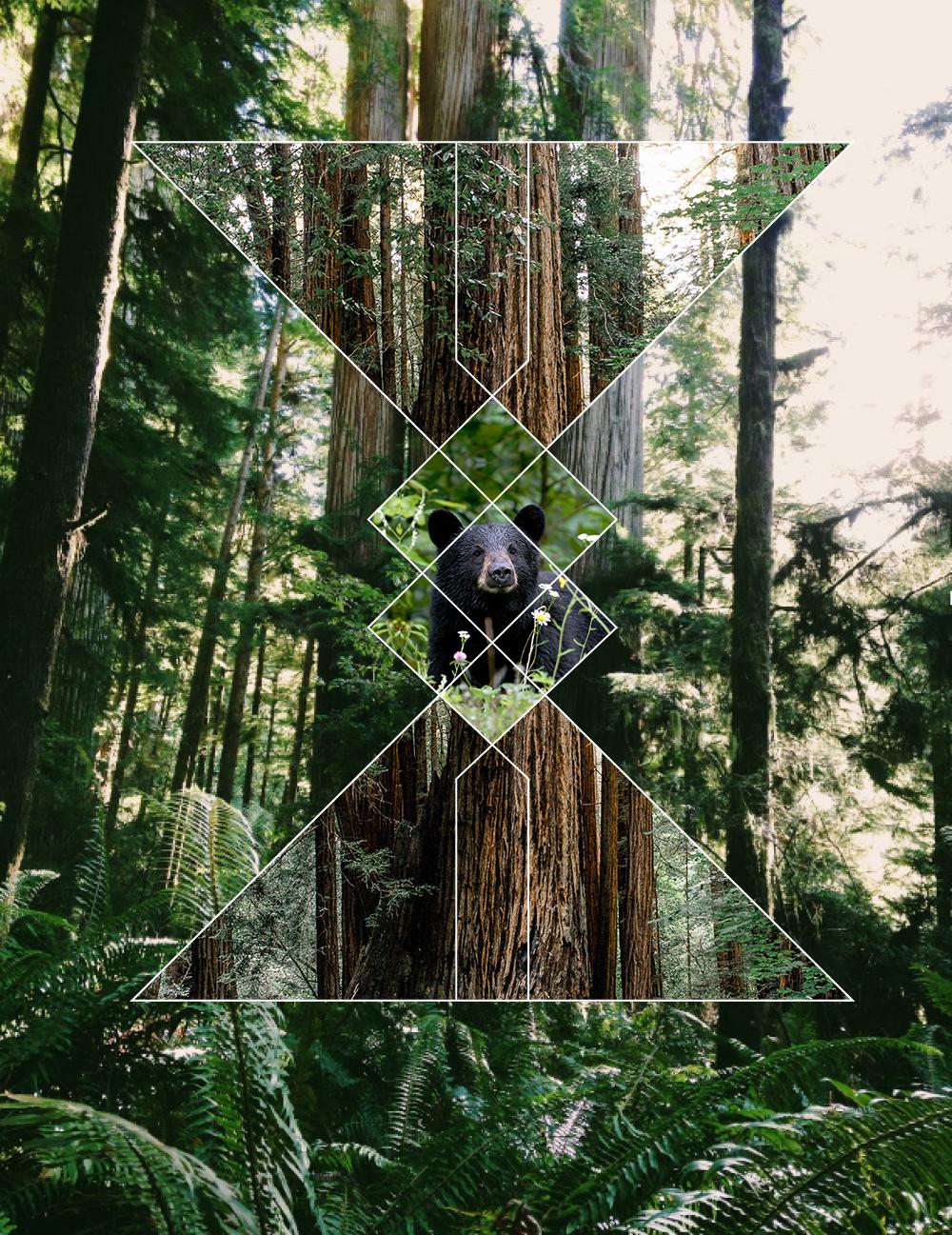 RedwoodsRaw.png