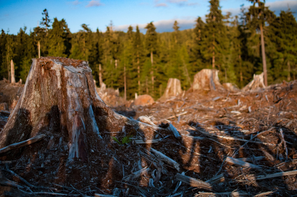 Tongass_SilhouetteClearcut.jpg