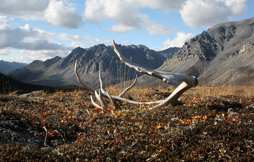 Brooks Range, Alaska. Photo by Willie the Wanderer