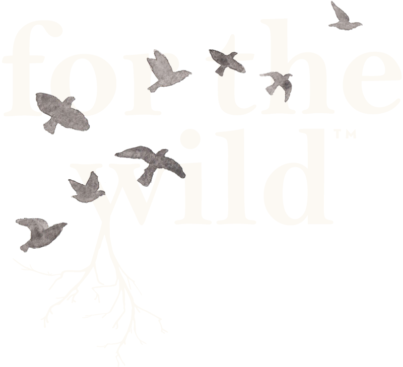 For The Wild Podcast Mike Phillips On Gray Wolves And The Vitality Of Death 152 For The Wild