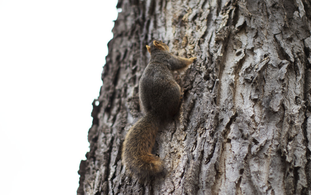 SQUIRREL | PC: Kayla Potts