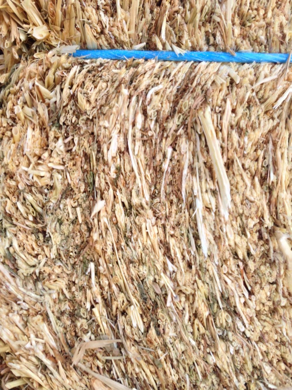 barley (2).JPG