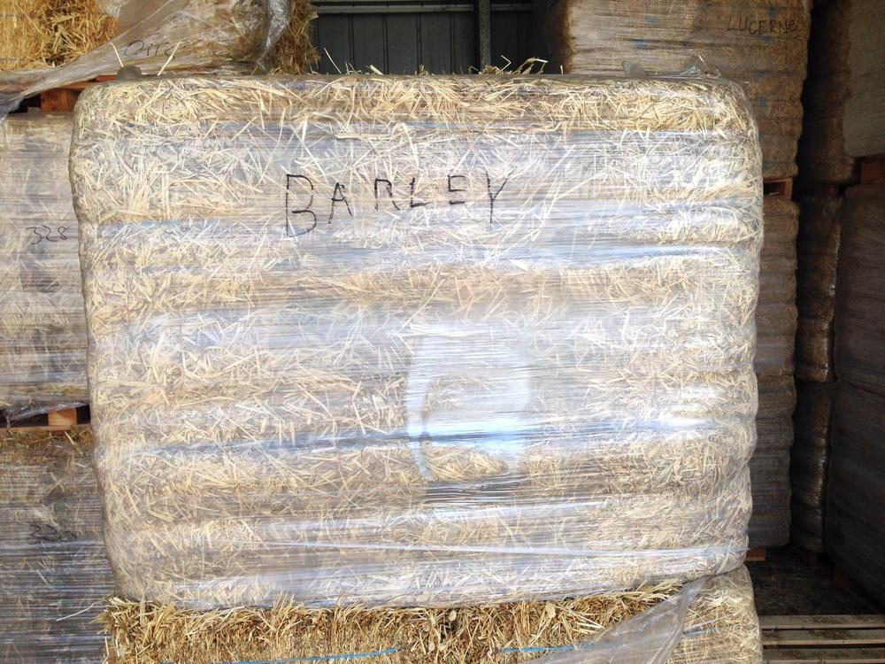 barley (8).JPG