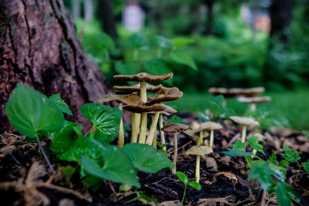 Mushrooms in Indiana Somewhere in Kansas | yolandamadethis.com