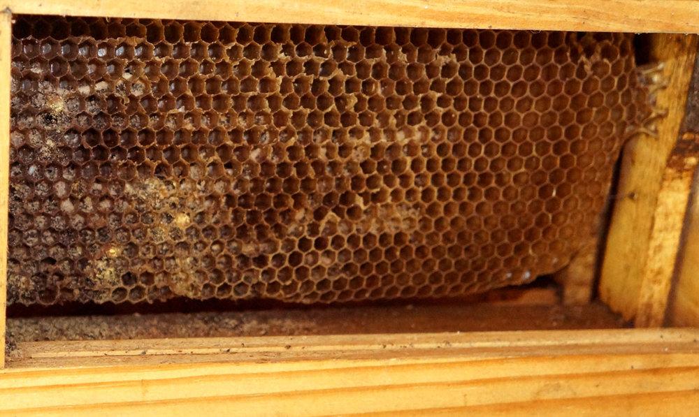 Detalhe favo das abelhas