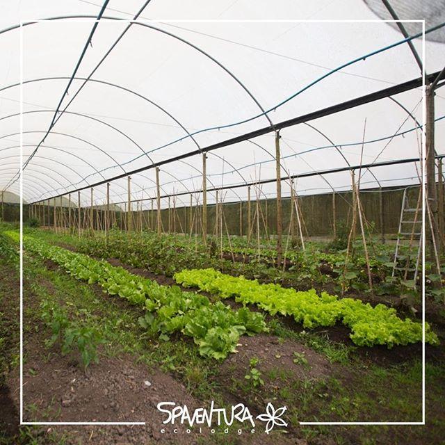99% sustentável  Fomos reconhecidos em 2015 pelo Prêmio ISTOÉ Empresas + Conscientes do Brasil. Levamos a sério o desenvolvimento de práticas sustentáveis a fim de reduzir os impactos ambientais como Reflorestamento através do agroflorestamento, adoção da energia solar, cultivo orgânico, aproveitamento da água da chuva e tratamento de afluentes.  A sustentabilidade e a preservação ambiental fazem parte do dia a dia do SPaventura Ecolodge.  Venha fazer parte você também, saiba mais em: http://www.spaventura.com.br  #SPaventura #Ecolodge #TurismoSustentavel #Ecoturismo #Sustentabilidade #MataAtlântica #TurismoEcológico #esportedeaventura #TurismodeAventura #turismoecológico #hoteldeaventura #vidasaudável #99sustentavel