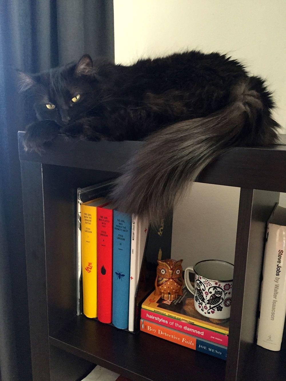 ZZ Cat dares curiosity to try.