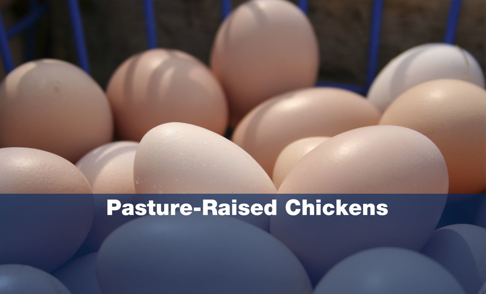 Pasture-raised-chickens-copy2.jpg