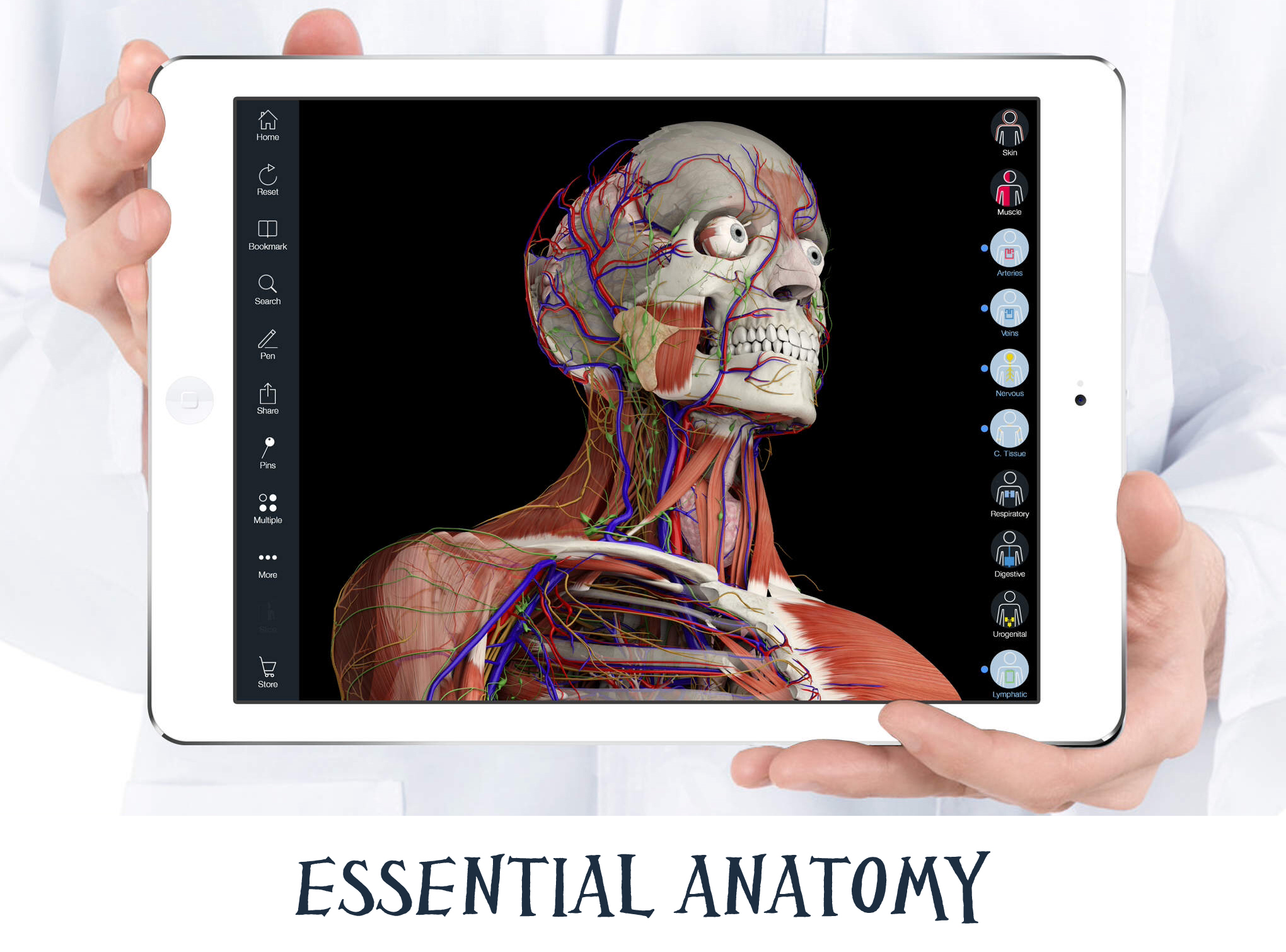 essentialanatomy1