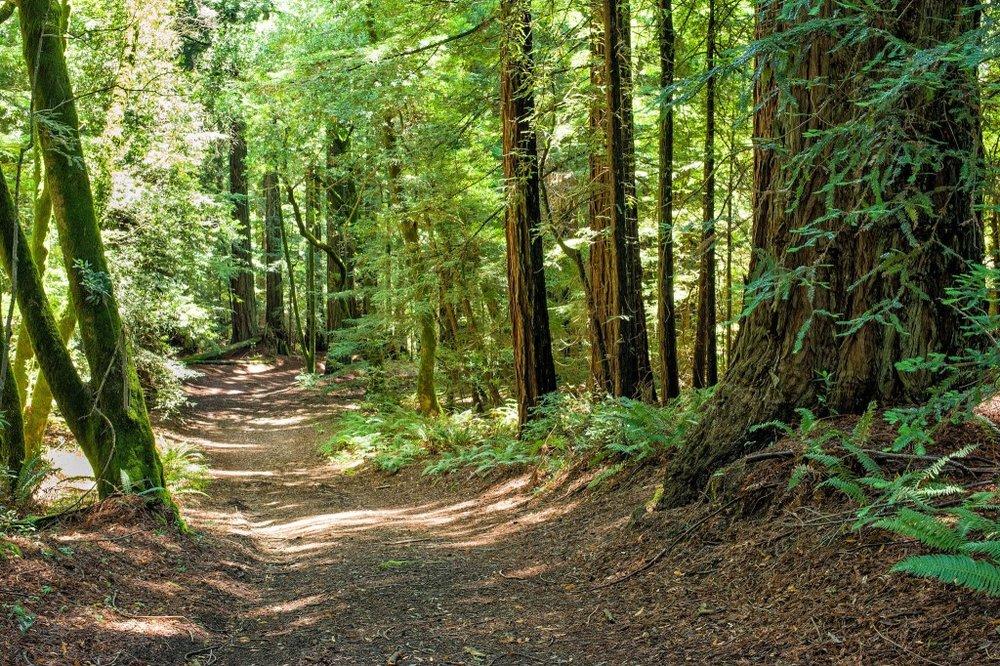 Indian Tree Marin County