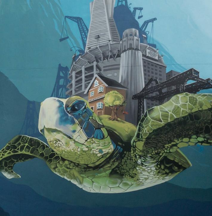 turtle.jpeg
