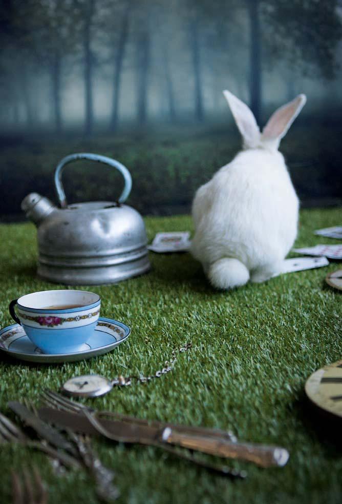 10.rabbit_15.jpg