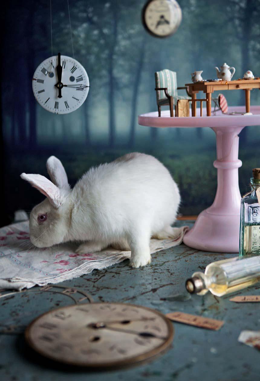 11.rabbit_12.jpg