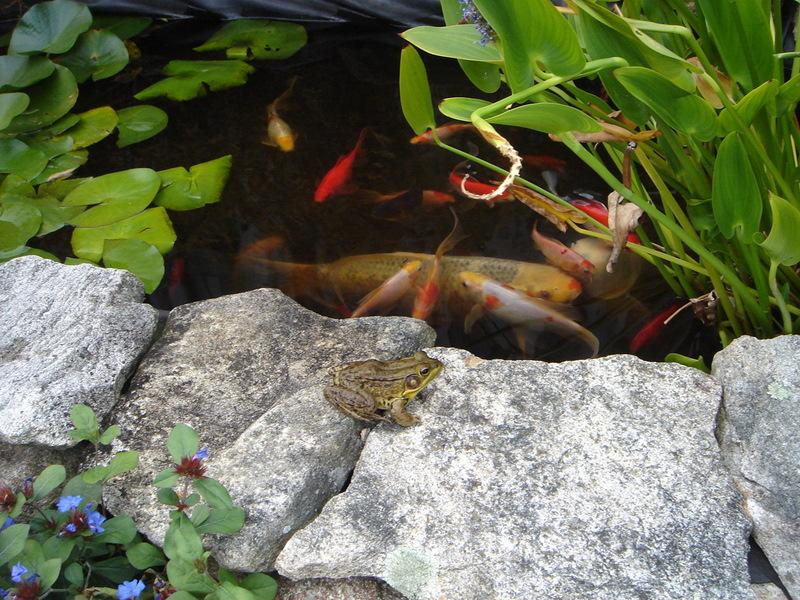frogsfish.JPG