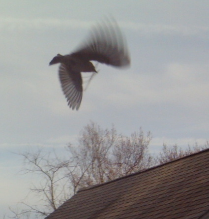 bird in flight.jpg