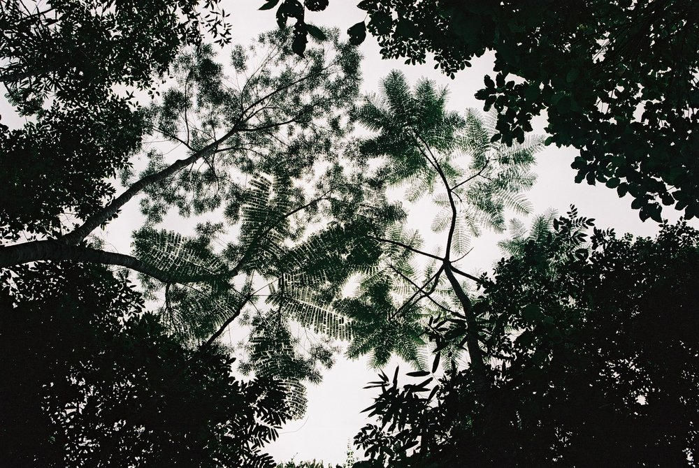 Jungle Canopy, Ilha Grande.JPG