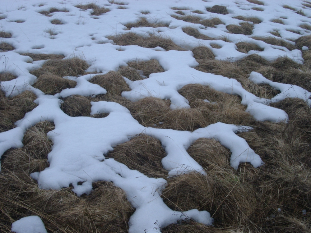 Grass and Snow, Alta.JPG