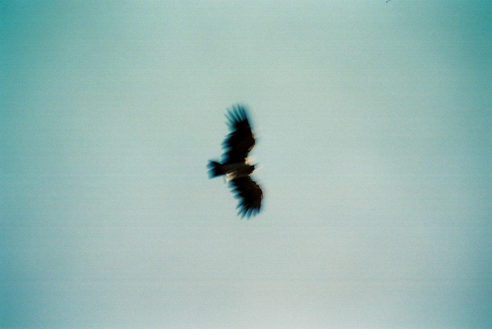 Condor One, Huechahue.JPG