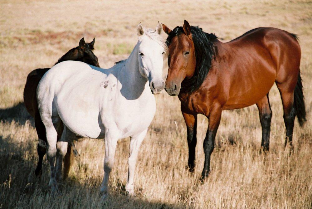 Stallion, mare, foal 1.JPG